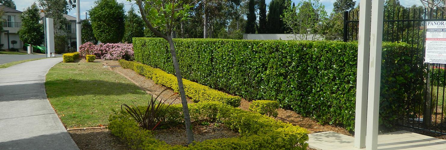 Bne lawn garden maintenance sydney for Landscape design courses sydney