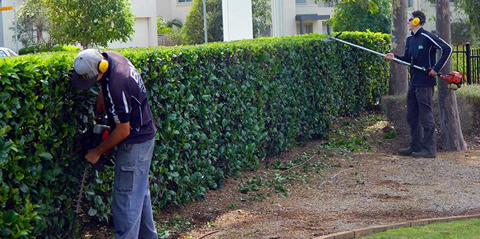 Bne lawn garden maintenance sydney for Gardening services