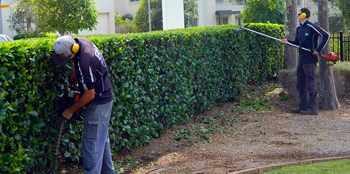 Bne lawn garden maintenance sydney for Lawn and garden services